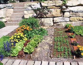 Tu huerto ecol gico en casa mariano bueno for Asociacion de plantas en el huerto
